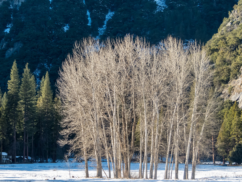 Bare Trees in  Sunlight on a Winter Afternoon