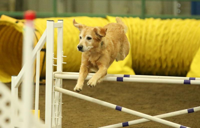 3-14-2016 Bloodhound-7642.jpg