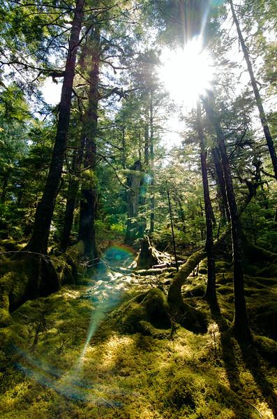 forest&light.jpg
