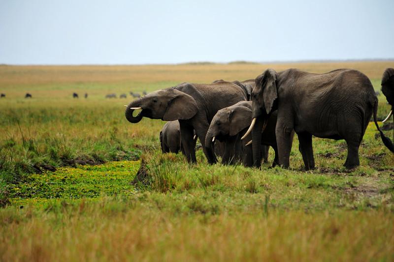 Africa 2010-147.JPG