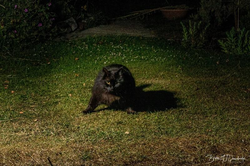 Garden Night Shoot-7364.jpg