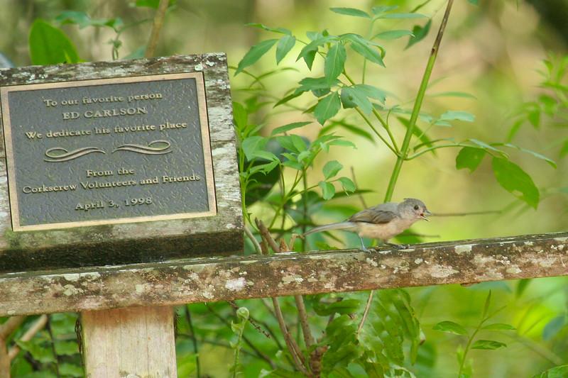Corkscrew Swamp Sanctuary, Florida