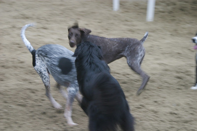 All Dogs Gym 9-15-2011