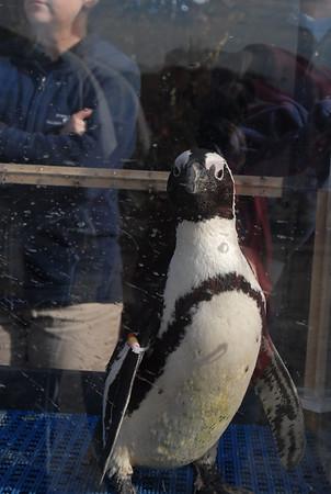 Run for the Penguins - KIDS RUN