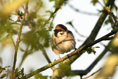 2016 Birds in the backyard