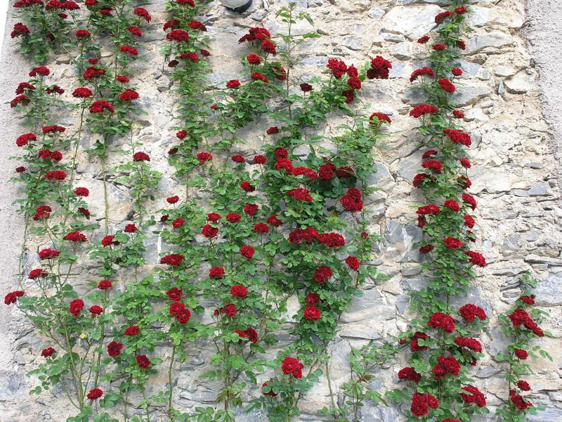 2006_05_22-19_01_09.jpg