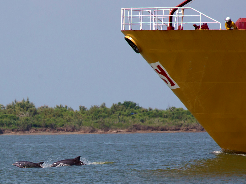 Two Dolphins in the bow wake of the tanker, as a crewman looks on