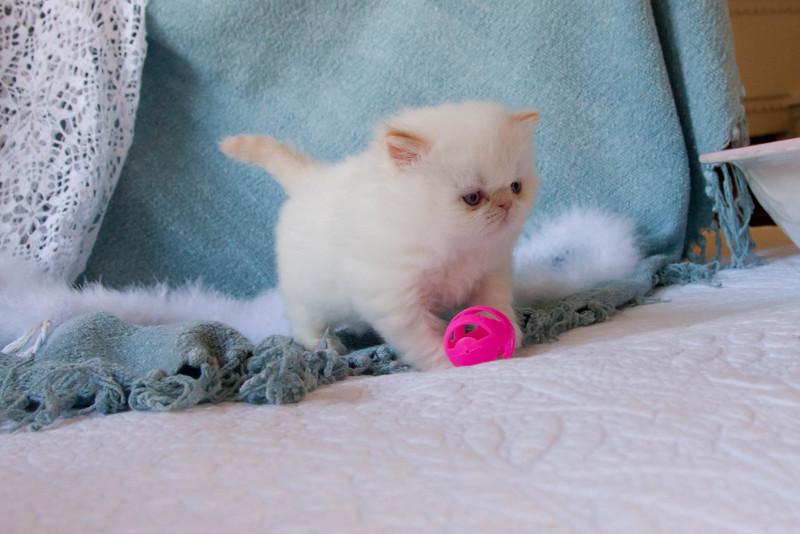 Himi_Kittens_Nov30-8031.jpg