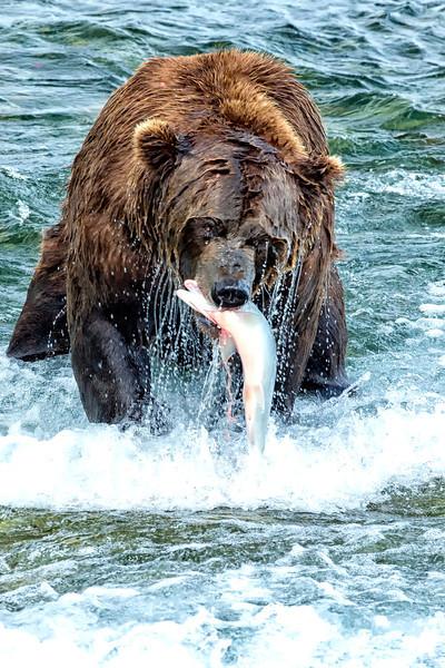 Alaska_2013_FH0T7688.jpg
