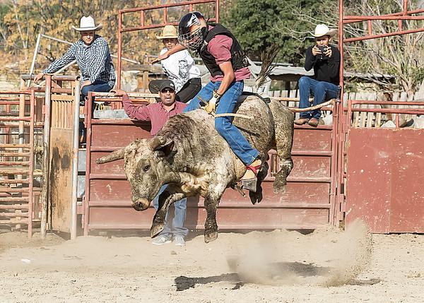 Junior Bull Riding Practice - Jan. 18