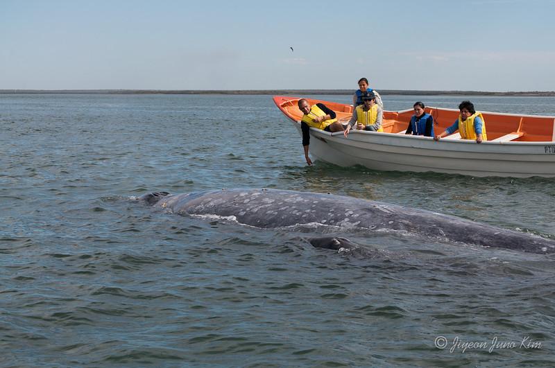 Mexico-Loreto-Whale-2128.jpg