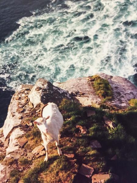 Unigoat - Cliffs of Mohr, Ireland  c.1999