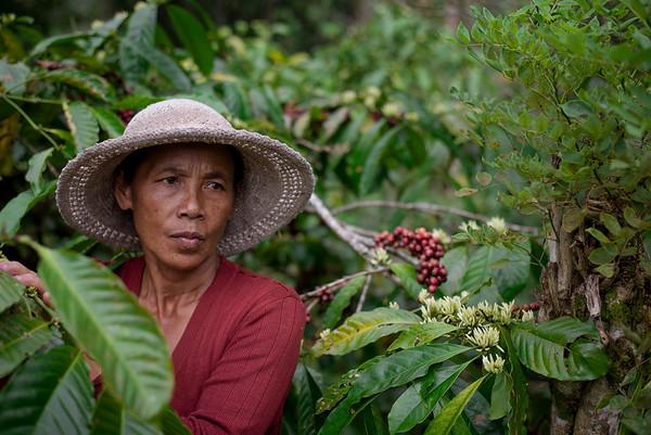 Java Mountain Coffee