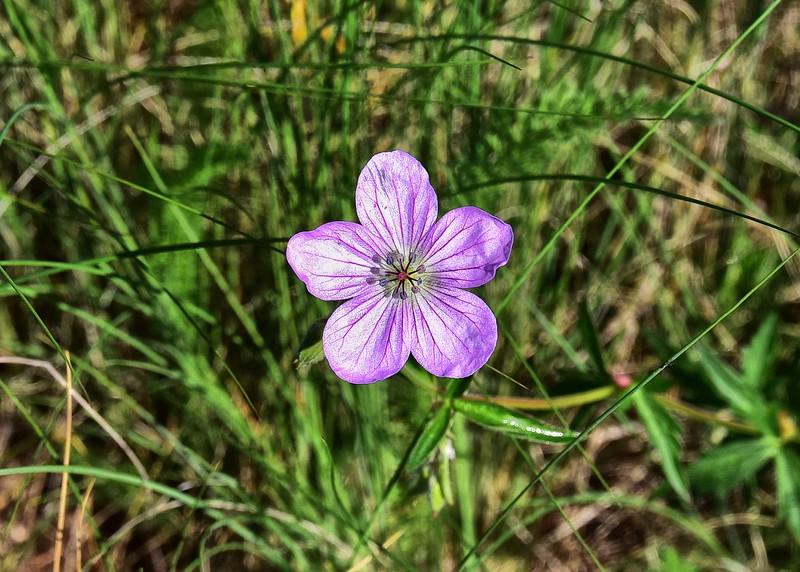 NEA_0330-7x5-Flower.jpg