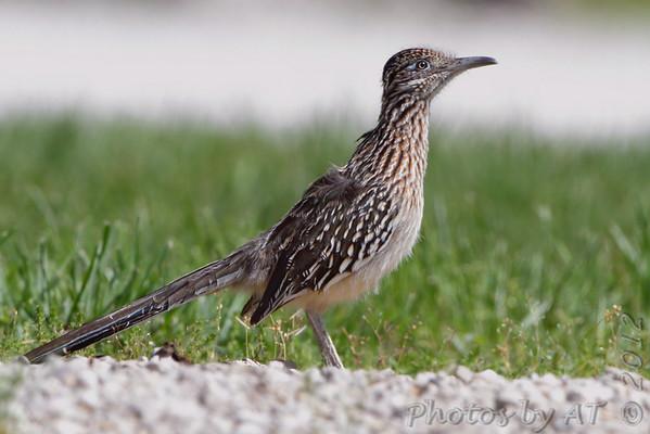 Birding 2012 April