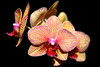 Close up of colorful and beautiful orchids
