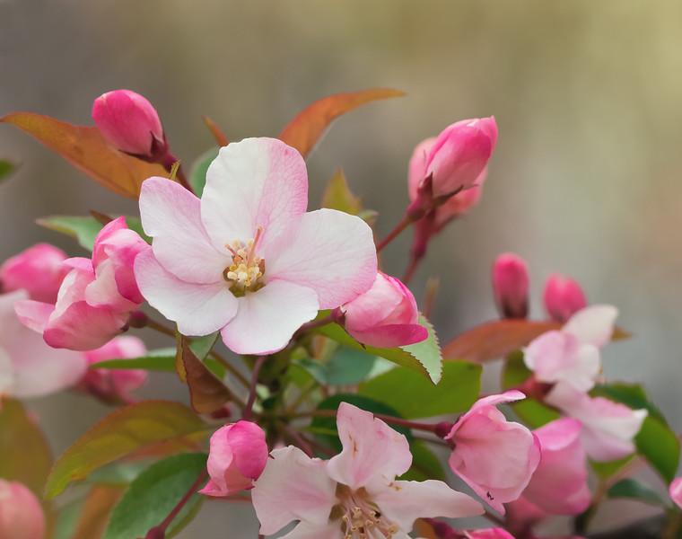 Spring Tree Blossom Close Up