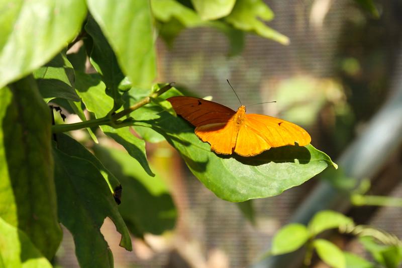 nanaples_botanical_garden_0010-LR.jpg