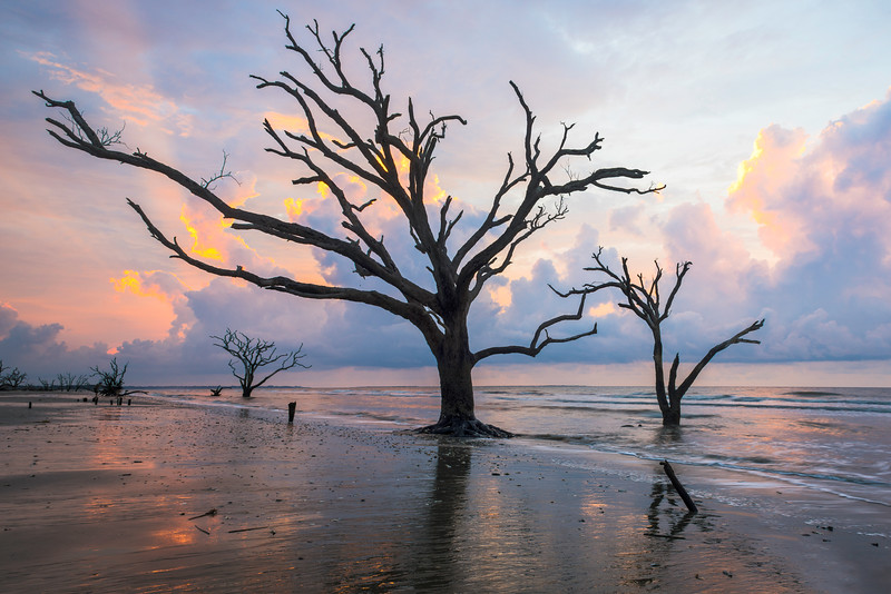 Skeletons Beach Botany Bay Boneyard South Carolina crop.jpg