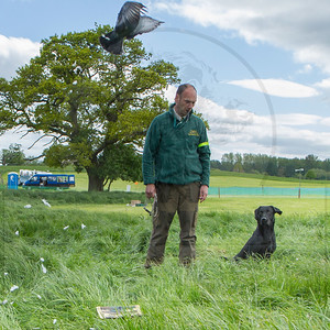 NATIONAL GUNDOG EVENT - YORKSHIRE GAME FAIR 2015