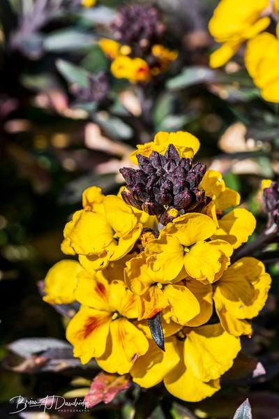 Macro_Spring-flowers-1471.jpg