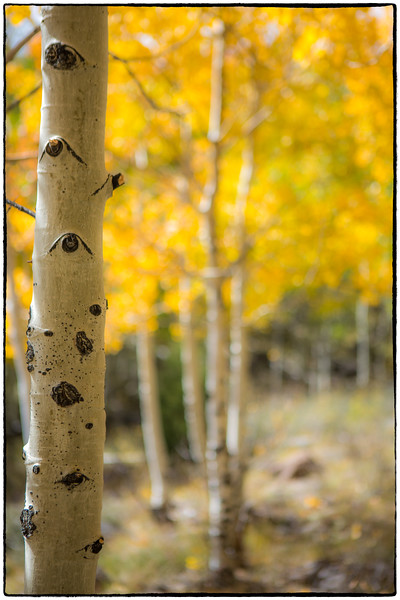goblins and aspens-2985-Edit.jpg