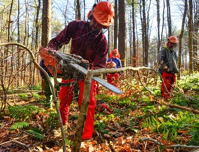 Chainsaw training - 110619