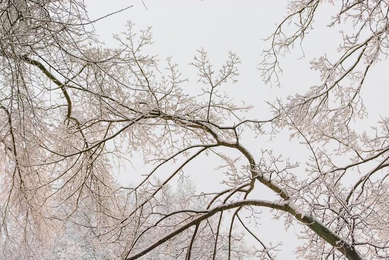 20140212-snow-DSC_4560.jpg