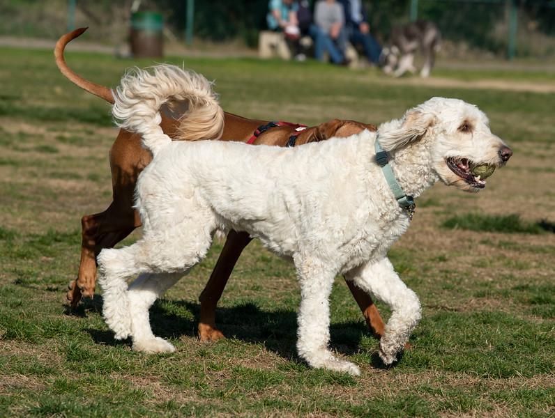 Dog6.jpg