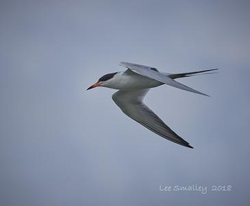KTOS Bird Walk Swan Pond Wetlands