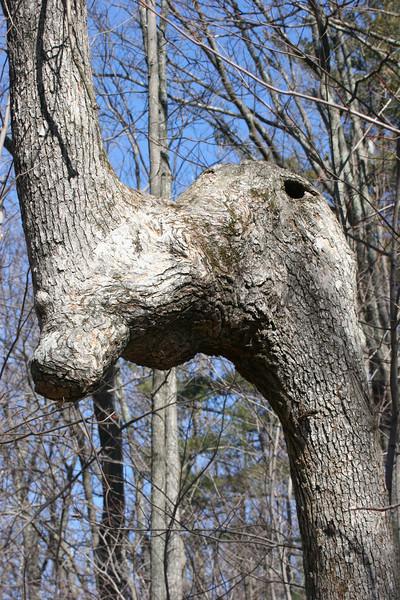 interesting tree trunk