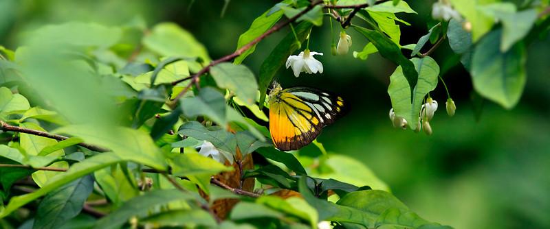 090620 KL Butterfly Park 22