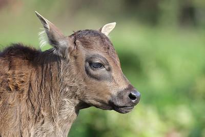 Animals from Lantau
