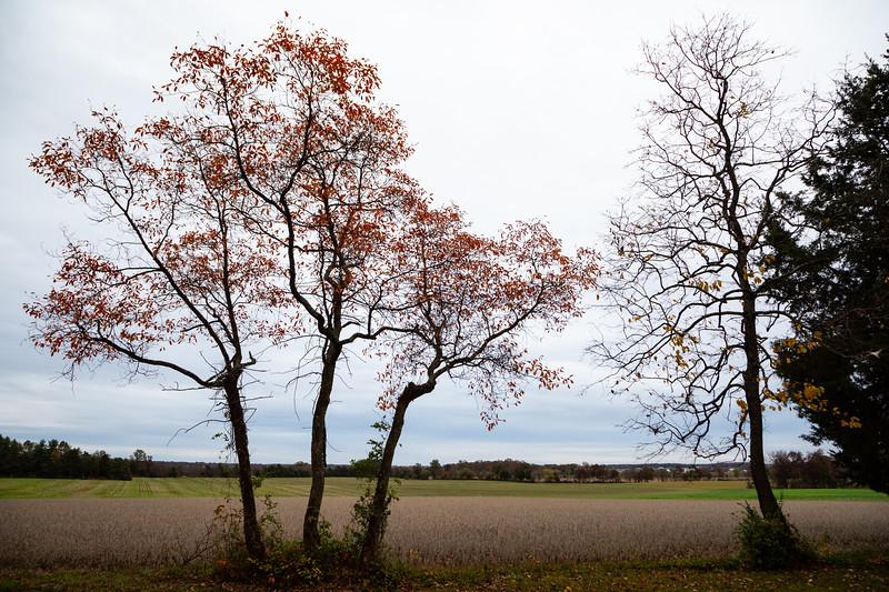 EastCavFieldTrees (1 of 1).jpg