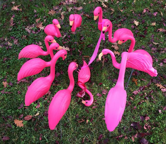 flamingo funeral.jpg