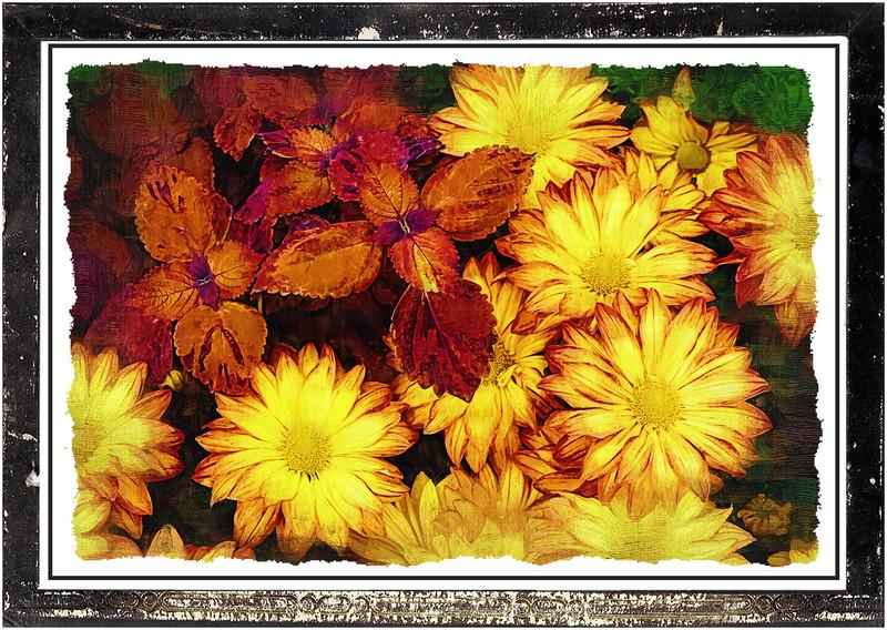 Mum show framed_0.jpg