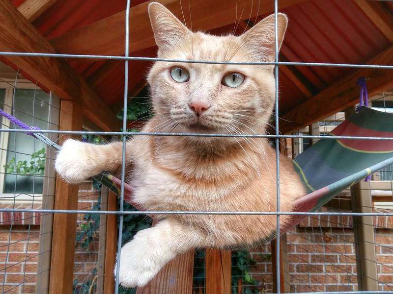 Erin animals (16).jpg