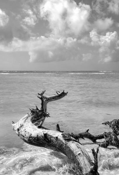 Driftwood, Bahia Honda, Florida (80402)