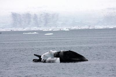Icebergs of Alaska