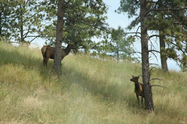 Bear Country USA - Aug 2014 (South Dakota)