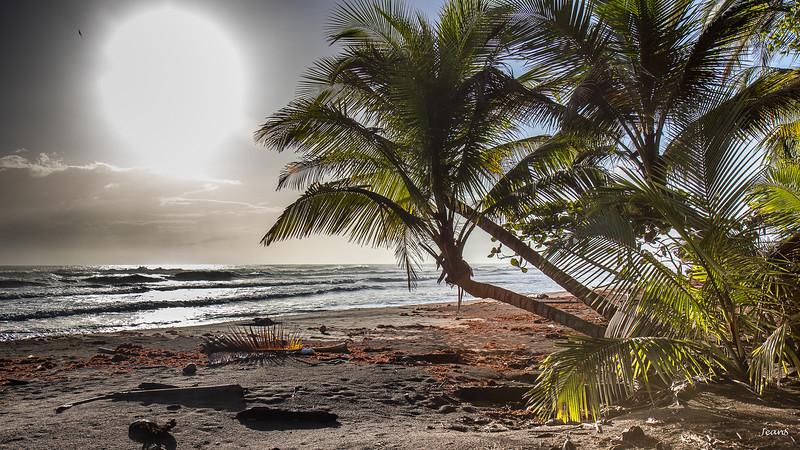 Caraibe _MG_3360.jpg