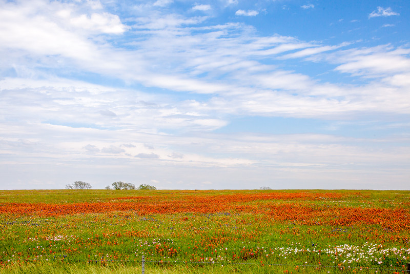 2016_4_9 Texas Wildflower Shoot-8495.jpg