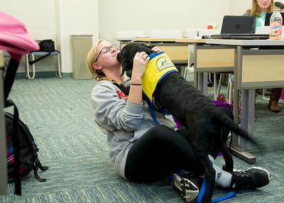 120115 Dog Training
