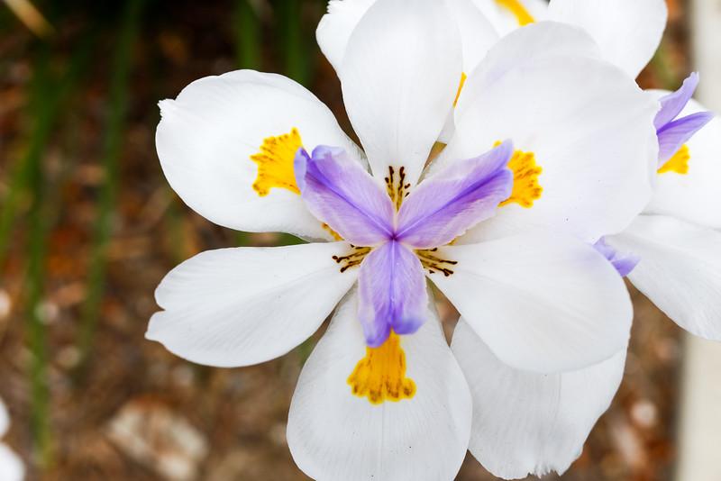 AlikGriffin_FujifilmX70_Flower.jpg