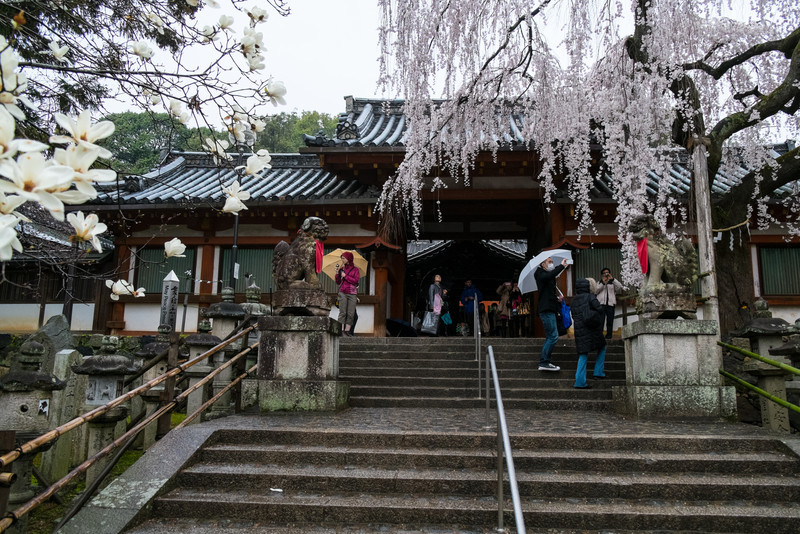 Nara Day 5 (82 of 374).jpg