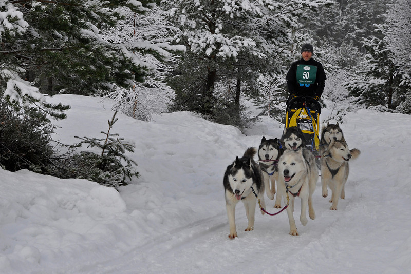 © Felipe Popovics 24-1-2010 Siberian Husky Sled Dog Rally, Loch Morlich, Highlands