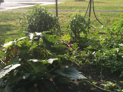 2012-08-24 Veggie Garden