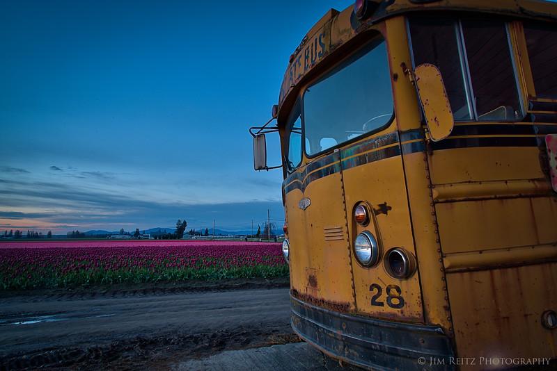 School bus - Skagit Valley Tulip Festival