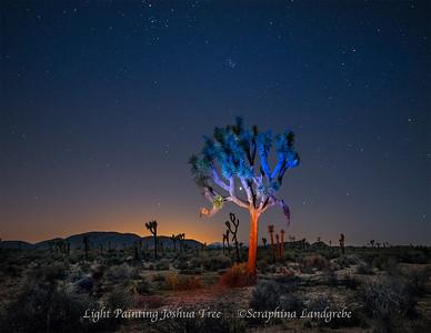 Joshua Tree NPL