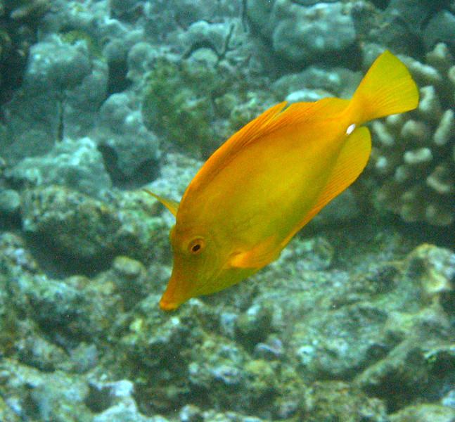 518- 20080416- Hawaii 20-Snorkelling IMG_0771.jpg